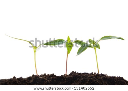 Young plants in earth isolated on white background.