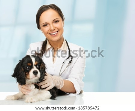 Young positive brunette veterinary woman with spaniel  - stock photo