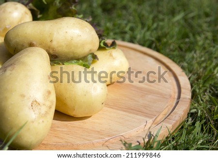 young potatoes on wood tray on the gras - stock photo