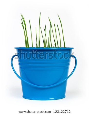 Young potted plants in blue pot - stock photo