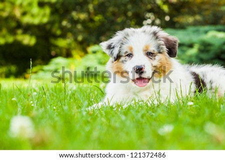 Young puppy lying on fresh green grass in public park - stock photo