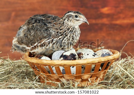 Young quail with eggs on straw on wooden background  - stock photo