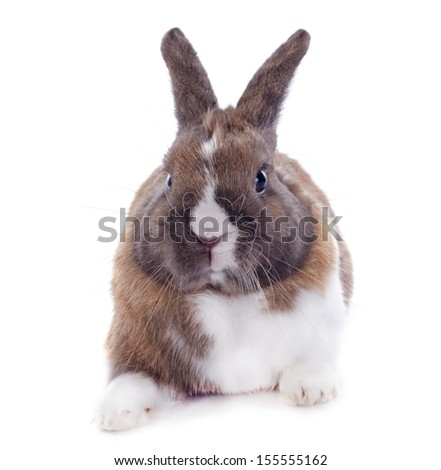 young rabbit  sitting in front of white background