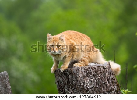 Young red cat before jumping on green background - stock photo