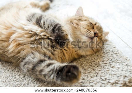 Young red cat sleeping with eyes closed - on white carpet - stock photo