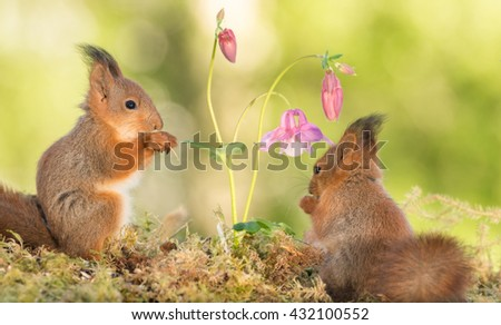 young red squirrels  standing with flowers