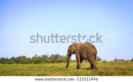 Young rescued elephant in Knysna Elephant Park, South Africa