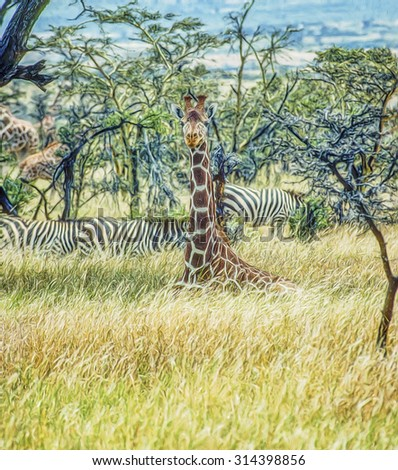 Young reticulated giraffe lying in grass,digital oil painting - stock photo