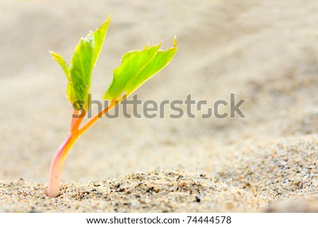 Young seedling growing in a desert sand. Extremely close up with shallow DOF. - stock photo