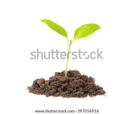 Young seedling growing in a soil isolated on white background - stock photo