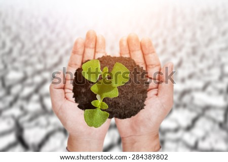 Young seedling growing in Hand and soil cracked background - stock photo