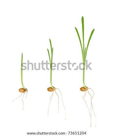 Young seedlings of plants. Stages of growth - stock photo