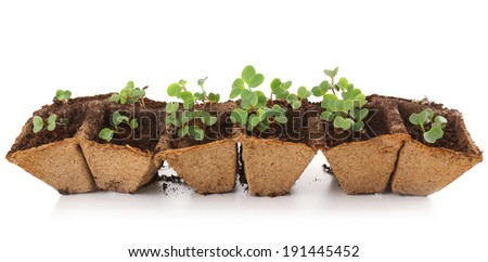 Young seedlings of radish in tray isolated on white - stock photo
