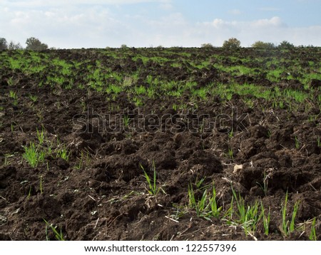 Young seedlings of weed growing in farmland - stock photo