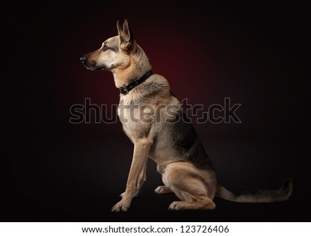 Young shepherd on dark red background