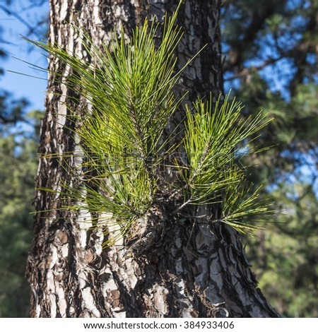 Young shoot on the trunk pines - stock photo