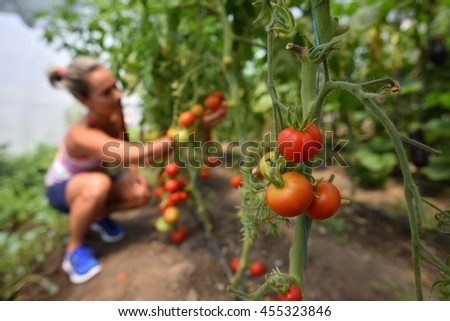 young smiling woman picking fresh vegetables in summer garden - stock photo