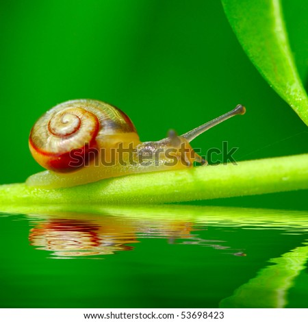Young snail Trichia hispida on fresh green leaf over garden pool. Macro shot with shallow dof ( snail is 7mm sized ) - stock photo