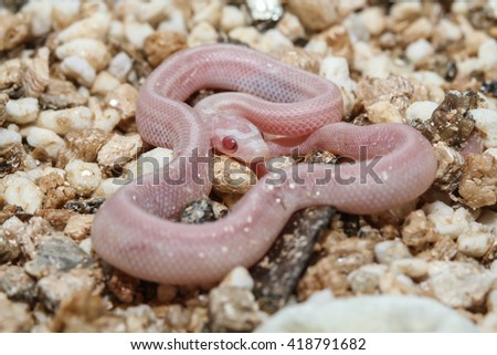 young snake - stock photo
