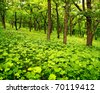 Young spring forest, green leaves - stock photo