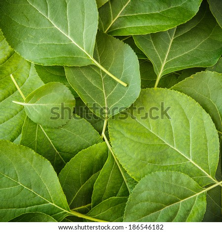 Young Spring Leaves, Top View - stock photo