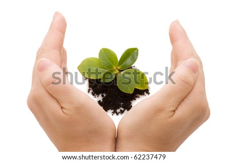 Young sprout and hands - stock photo