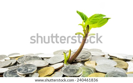 Young sprout from pile of coins on white background, concept for investments or savings - stock photo