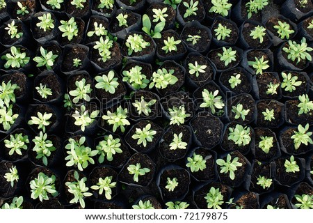 young sprout green plant garden - stock photo