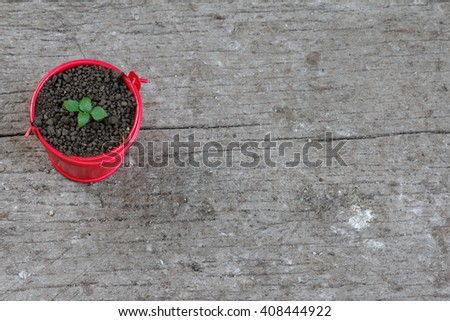 Young sprout grow inside a little red pail. Concept of growth, new and beginning - stock photo