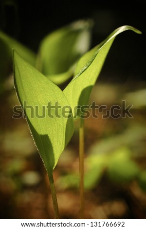 young sprout of plant growing in the forest