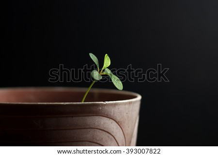 Young sprout on a black background... - stock photo