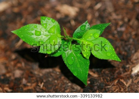 Young sprout on the ground