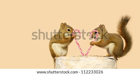 Young squirrels  holding candy canes, and looking happy while perched on a birch log with copy space. Part of a  series. - stock photo