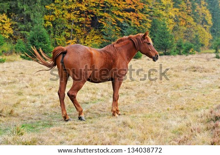 Young stallion grazing in a pasture