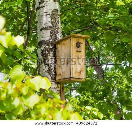 Young starling peeking out of the birdhouse - stock photo