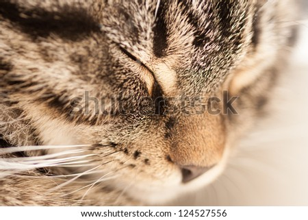 Young striped cat napping (sleeping). Closeup. - stock photo