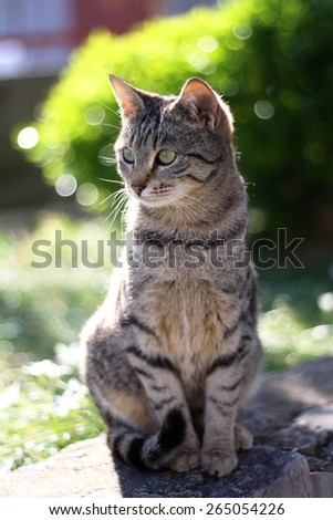 Young tabby brown cat sitting in the garden. Vertical format and selective focus. - stock photo