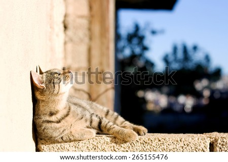 Young tabby cat lying on the wall and looking up, sunbathing. Selective focus. - stock photo