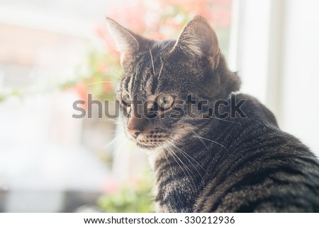 Young tabby cat sitting in front of window looking towards camera. - stock photo