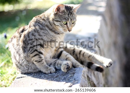 Young tabby cat sitting in the garden, in a funny pose. Selective focus.  - stock photo