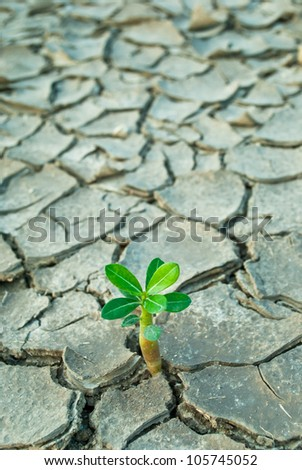 young tree growing around cracked soil - stock photo