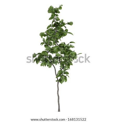 young tree isolated - stock photo