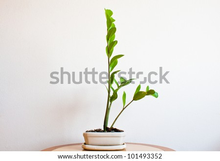 Young tree on a table in the room - stock photo