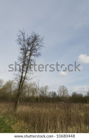young trees in a portrait landscape