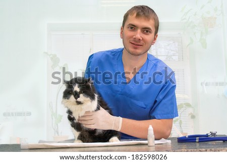Young vet inspects a black and white cat - stock photo