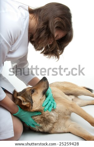 Young vet inspects a dog in a clinic