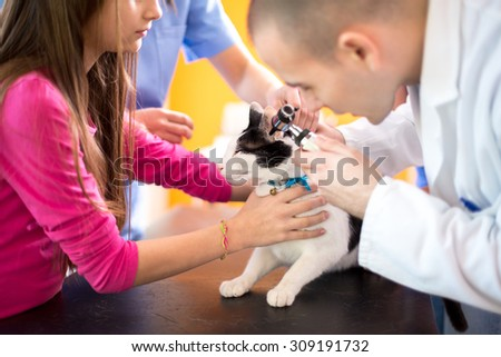 Young veterinarian at work checking cat's ear at vet ambulant - stock photo