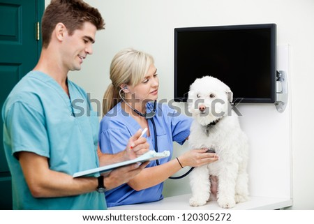 Young veterinarian doctors in scrubs examining a dog at clinic - stock photo