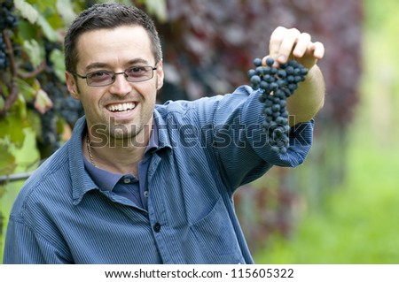 Young vintner is harvesting red grape in the vineyard - stock photo