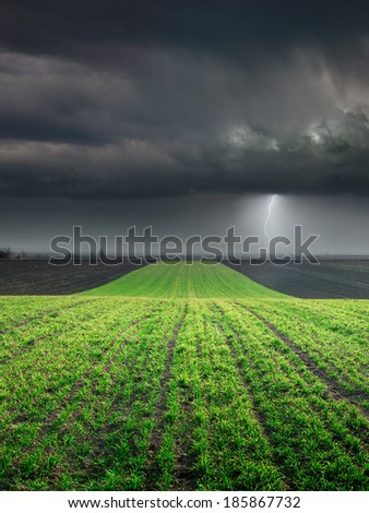 Young wheat crop in field towards the big cloud and lighting storm - stock photo